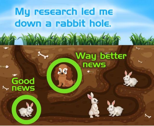 Rabbit Hole Puppy